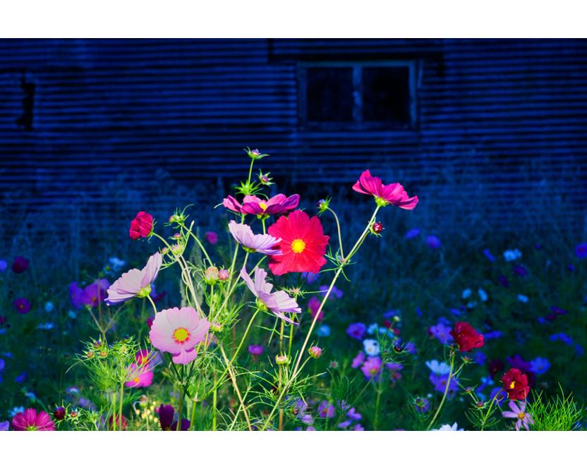 0708.-Cosmos-at-night-Morere-Hawkes-Bay