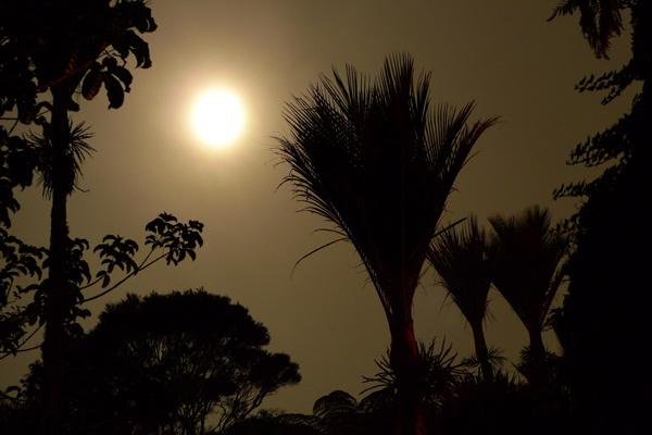 3. Waitakere nikau and the rising moon