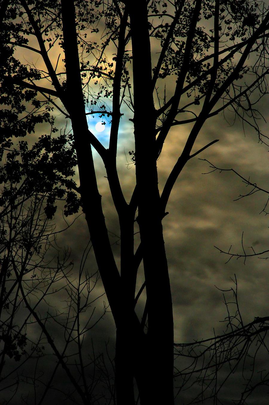dark desires after dusk pdf free download