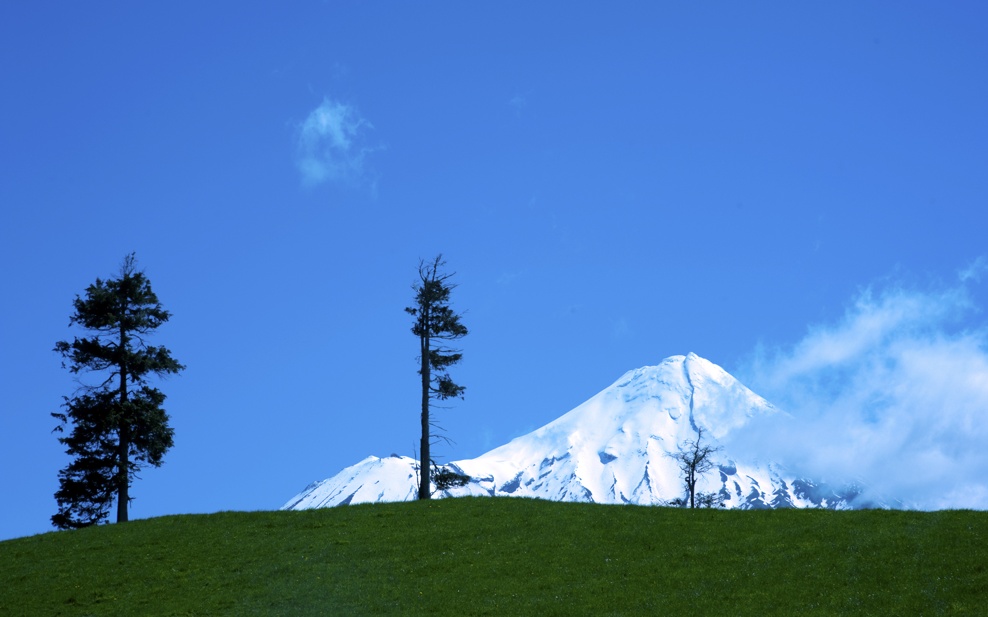 DSC_2758. Cool majesty, on Waingongoro Rd, South Taranaki