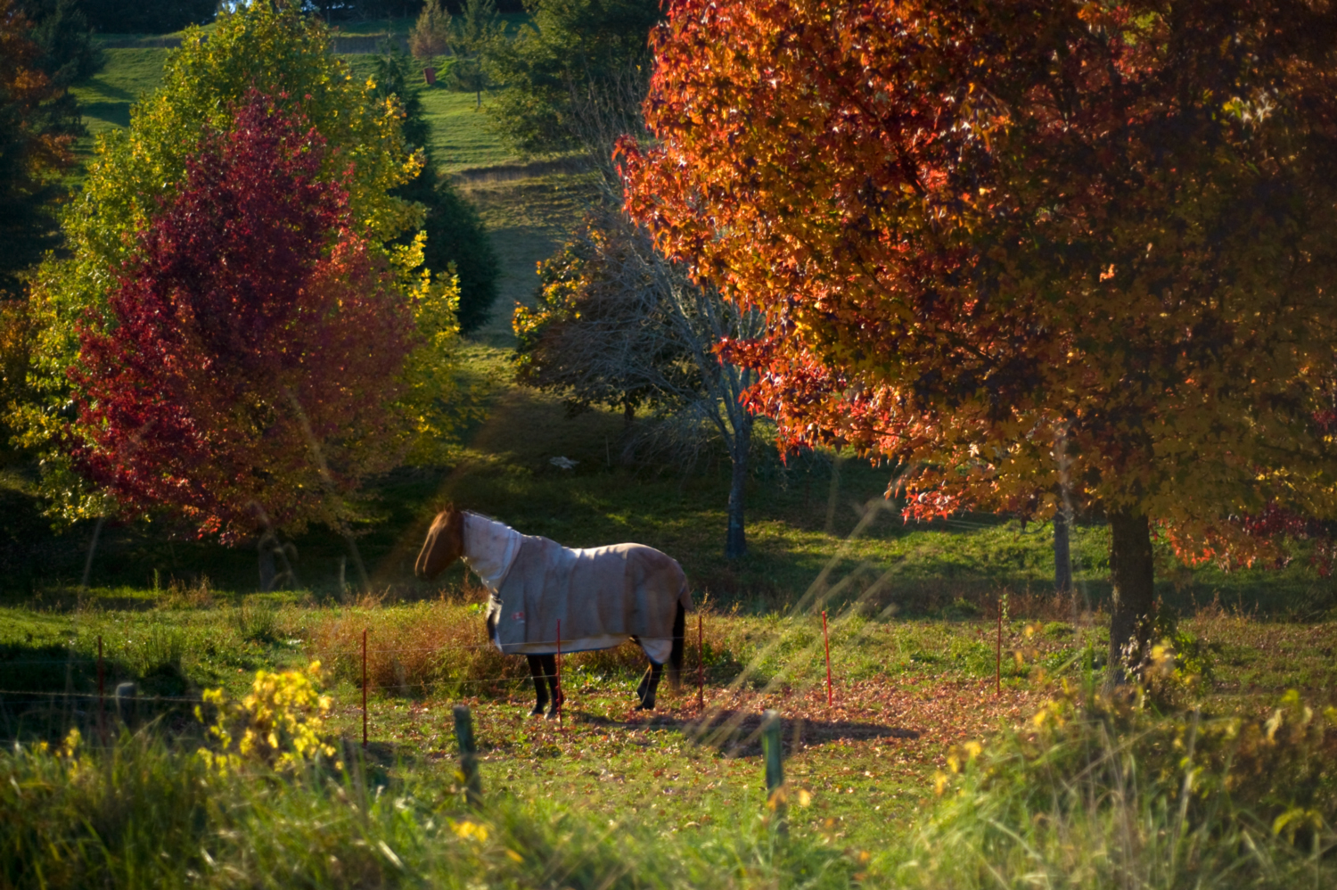 Autumnal equine moonlight, Garden Valley.