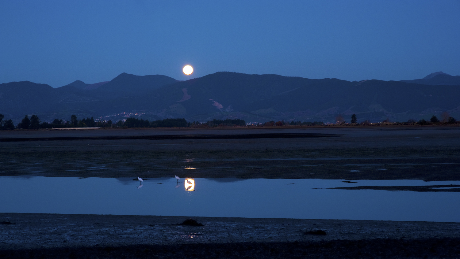 Moonrise with white herons